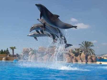 На территории аквапарка есть дельфинарий