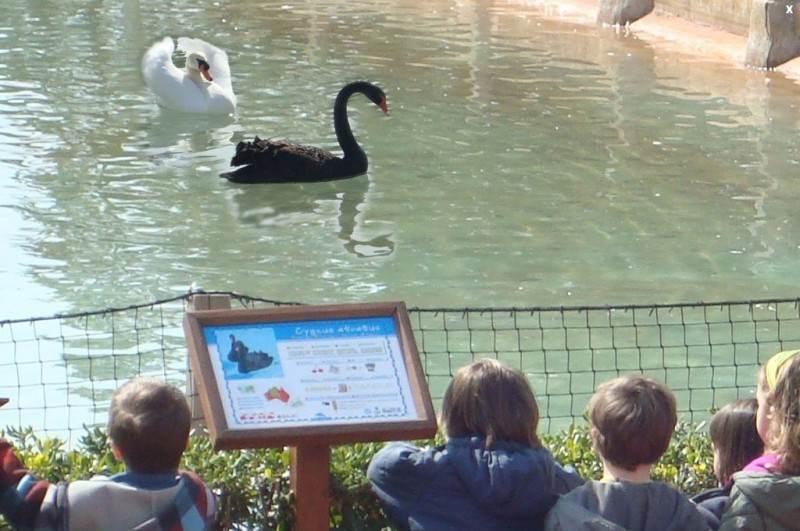 Специальные таблички с информацией об обитателях зоопарка
