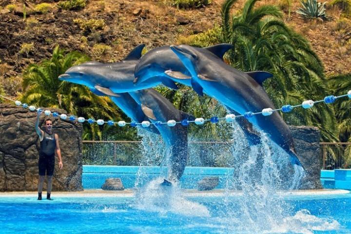 Шоу дельфинов в тематическом парке Palmitos