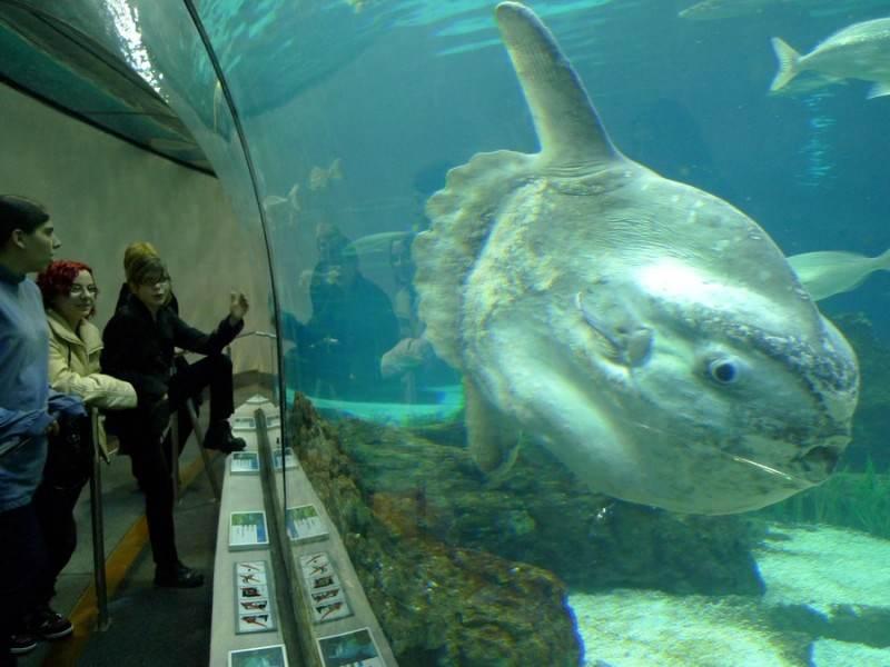 Огромные аквариумы Барселоны