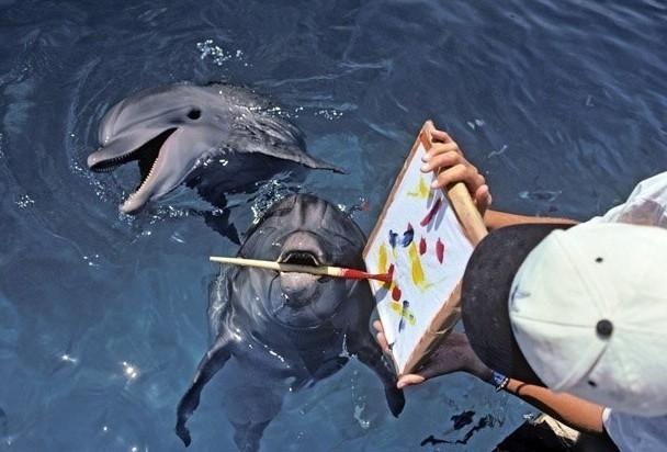 На представлении в дельфинарии