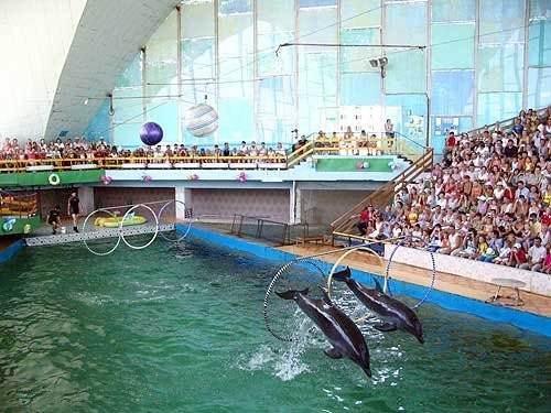 Дельфинарий в Евпатории