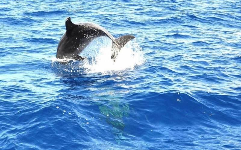 Морская прогулка на катамаране к китам