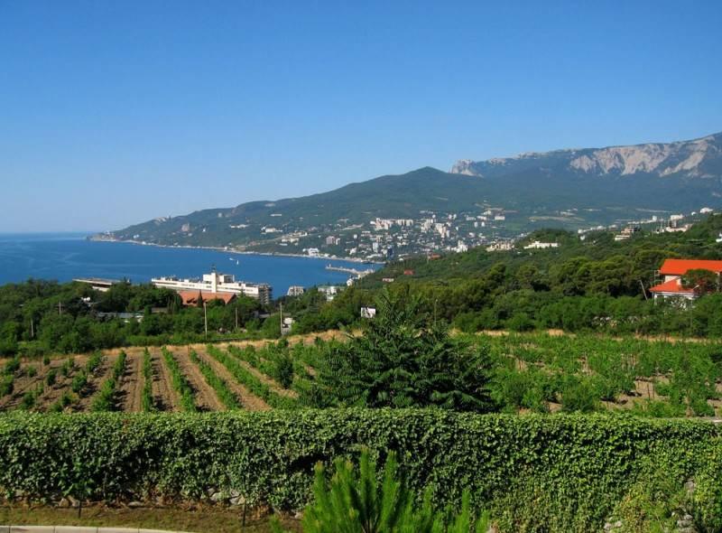Виноградные поля вблизи Массандры