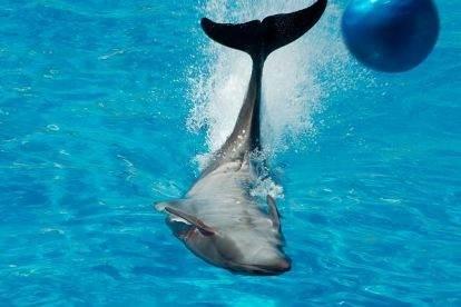Дельфинарий Sealanya