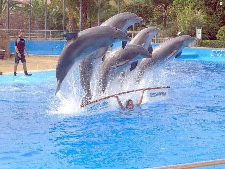 Зоопарк и дельфинарий Marineland Catalunya
