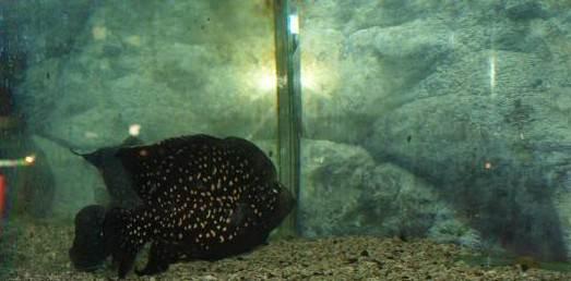 Симферопольский аквариум