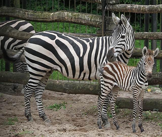 Зоопарк в Каунасе