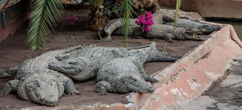 Зоопарк Cocodrilo