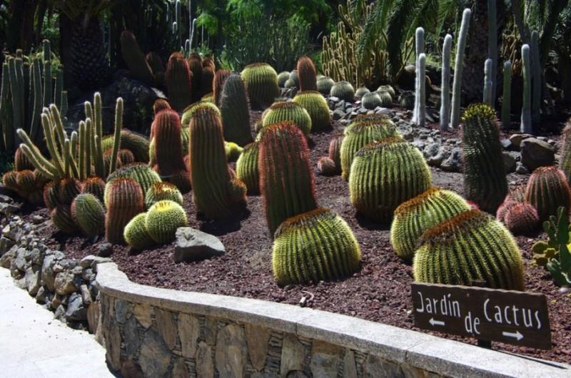 Парк кактусов Cactualdea Park