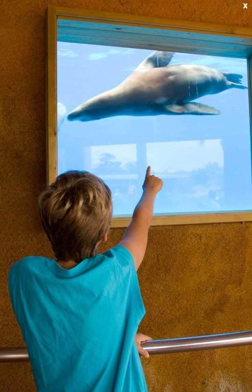 Понаблюдать за жизнью под водой можно через специальные окна