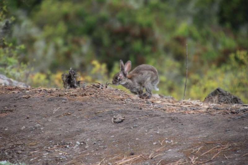 Фотохота на кролика :)