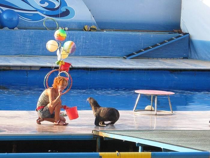 Выступление морских котиков