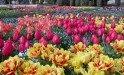 Ботанический сад Болчика
