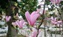Цветение в садах Батуми