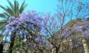 Цветение в Валлетта