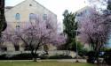 Весеннее цветение в Иерусалиме