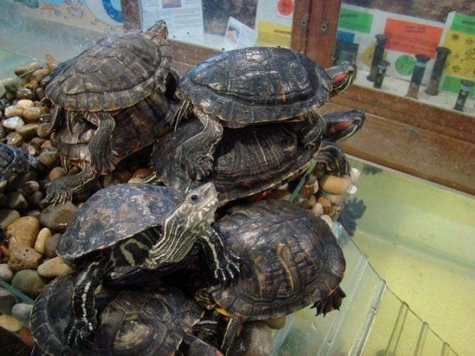 Живой уголок в  аквариуме Варны