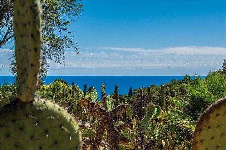 Вид на море сквозь кактусы