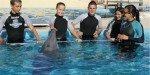 Общение с дельфинами