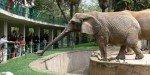 Вольер слонов