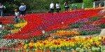 Весенний Никитский ботанический сад полыхает яркими красками тюльпанов