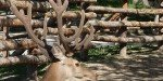 В зоопарке Варны