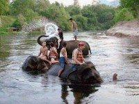 Треккинг на слонах по Краби