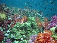 Посещение кораллового острова Ко Хэй