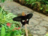 Музей бабочек и Драконое дерево
