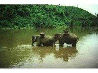 Экскурсии по реке Квай
