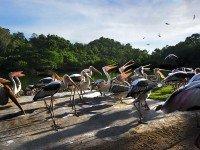 Птицы в зоопарке