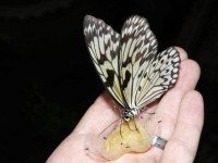 Сад бабочек и мир насекомых