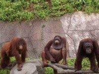 Зоопарк Khao Kheow