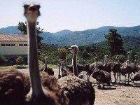 Страусиная ферма – зоопарк