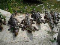 Зоопарк на острове Пхукет