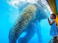 Купание слонов - любимое шоу детей