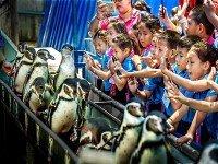 Пингвины в Таиланде