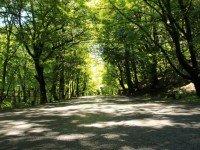 Лесной тоннель Гомборского перевала