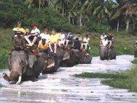 Деревня слонов (Pattaya Elephant Village)