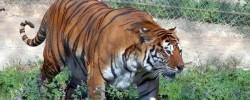 Зоопарк Rio Safari Elche