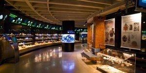 Морской музей и дельфинарий