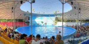 Дельфинарий «Акварель» в Алуште