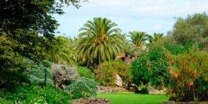 На территории ботанического сада Виера-и-Клавихо