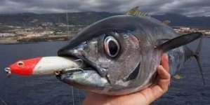Морские прогулки и рыбалка