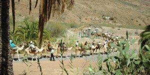 Сафари на верблюдах