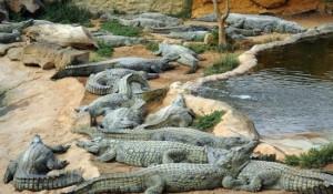 Главные обитатели зоопарка Cocodrilo на Гран Канарии