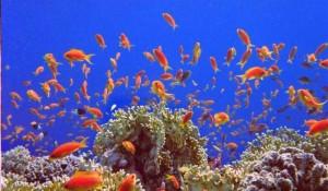 Коралловые острова Египта