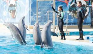 Дельфинарий Aquopolis Costa Dorada