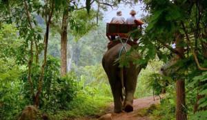 Прогулка на слонах (Elephant trekking)